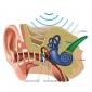 Viaggio nella meraviglia del suono: L'orecchio